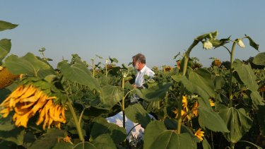 Sydney Morning Herald chief correspondent Paul McGeough picks sunflowers for the families and friends of victims who died in the downing of flight MH17.