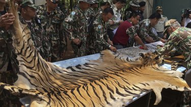 Thai National Parks and Wildlife officers examine the skin of a tiger at the Tiger Temple in Thailand last week when police also stopped a truck carrying two tiger skins and other animal parts as it was leaving the temple.