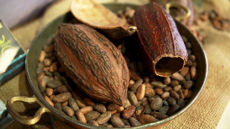 Roasted cocoa beans are ground into a powder then made into chocolate.