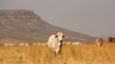 The leaked documents suggest ever-increasing amounts of WA pastoral land are becoming unsuitable for grazing.