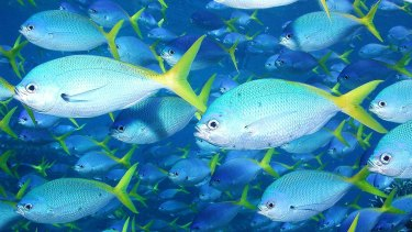 Debate is increasing over which marine areas should be protected.