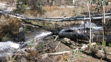 Springvale mine was pumping polluted mine water into the top of the East Wolgan swamp in Sept 2008. The swamp has been extensively damaged as the polluted water killed off all the vegetation and also ground cracking caused by subsidence resulted in the swamp draining and drying out.