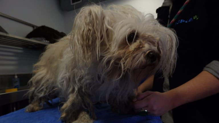 RSPCA  staff seized more than 100 dogs and puppies from a property in northern Victoria.
