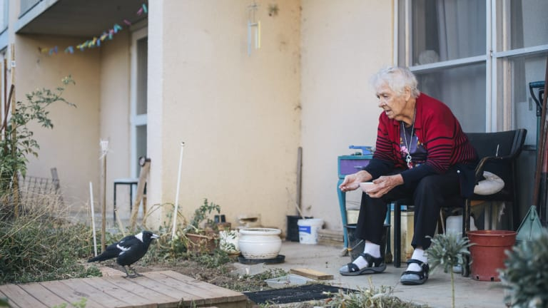 Owen Flats resident, Laurel Dakin, feeds the magpies outside her public housing flat  which is expected to be bulldozed as part of the Northbourne corridor plan.
