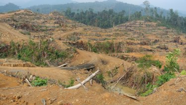 Freshly cleared forest inside the Leuser Ecosystem near Kuala Simpang in Aceh, March 2014. Local activists said this clearing for a palm oil plantation was illegal.