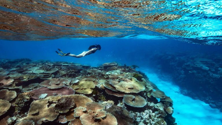 'Still an amazing experience': Gliding over fields of coral at Rib Reef off Orpheus Island, North Queensland.