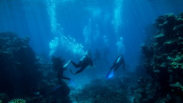 Divers look at fish life and coral on Flynn Reef near Cairns.