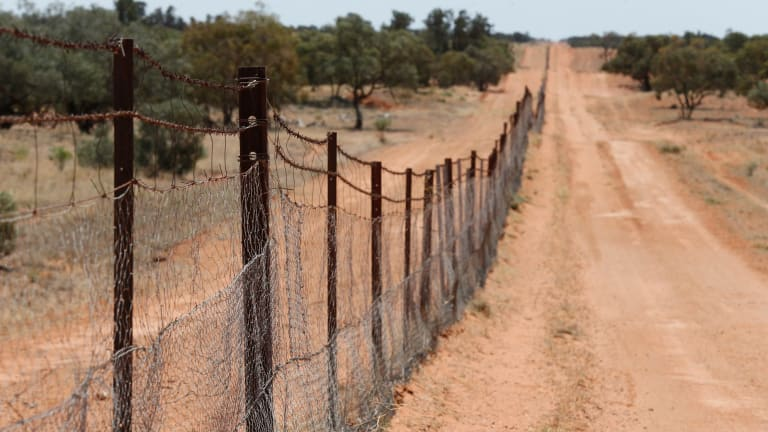 The dingo fence is the longest fence in the world. Built in 1880, it runs from Queensland, then along the NSW South Australian border near Broken Hill.