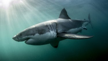 Shark skin has been found to increase speed.