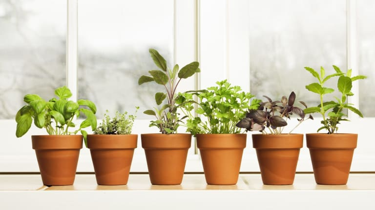 Herbs to grow: Planting herbs in the Canberra winter on herb garden table, herb garden font, herb garden ideas, herb garden direction, herb garden spacing, herb garden layout, herb garden common mistakes, herb garden theme, herb garden background, herb garden attraction, herb garden art, herb garden fabric,