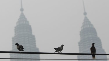 Pigeons on a power cable near Malaysia's landmark structure, Petronas Twin Towers, shrouded with haze in Kuala Lumpur on Sunday.