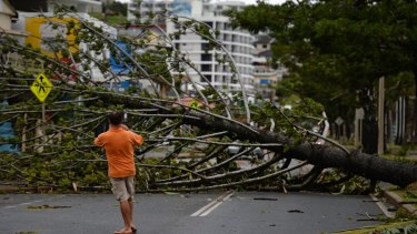 A resident takes a photo of a fallen tree brought down by Cyclone Marcia in Yeppoon.