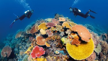 The Great Barrier Reef, which Environment Victoria chief Mark Wakeham says would have been destroyed many years ago if not for the lobbying of green groups.