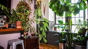 "The ""house jungle"" trend is popular in America but it could be coming to the capital."