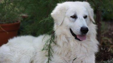 dogs best friend gungahlin