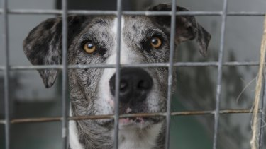 Almost 25,000 animals were surrendered to RSPCA Queensland in 2015.