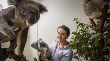 Bridie Schultz with Romeo the koala and other captive koalas at Dreamworld.