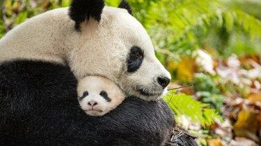 Pandas Ya Ya and Mei Mei in Born in China.