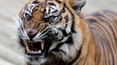 The CCC will not be a toothless tiger under the new Labor government, according to Attorney-General Yvette D'Ath.