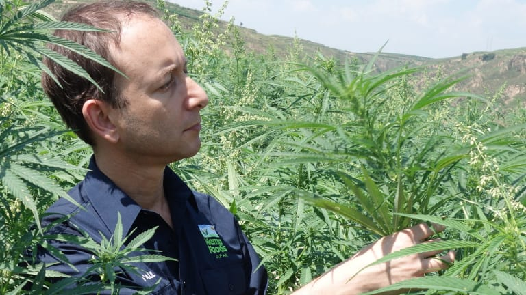 Paul Benhaim, founder of Hemp Foods Australia, is  hoping hemp products will be approved for consumption in Australia.