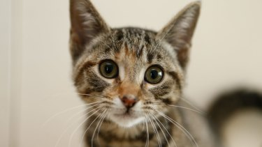 Many cats are not vaccinated against the virus, which can be fatal.