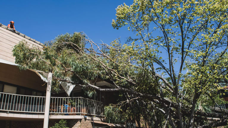 A tree toppled over onto a house in Farrer due to Wednesday's strong winds.