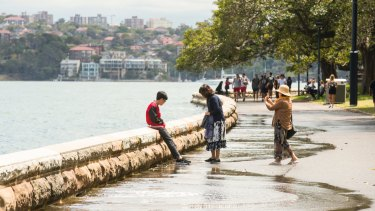 High tide flooded the footpath at the Royal Botanic Gardens in Sydney on Tuesday.