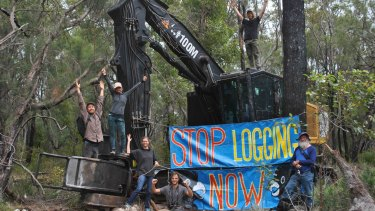 The activists successfully stopped the logging in Helms Forest, near Nannup, on Monday.