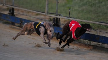 The ACT government plans to no longer support greyhound racing in the territory.