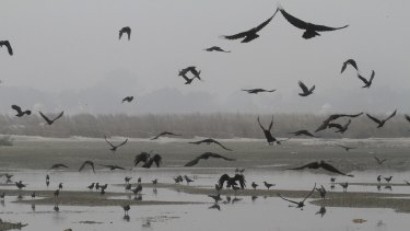 Vultures and crows fly over where around 80 bodies were found floating in the northern town of Unnao.