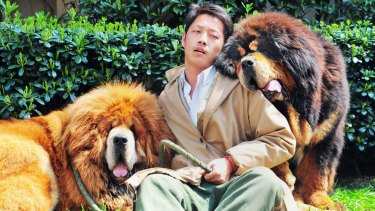 Million dollar puppy: The Tibetan mastiff on the left was supposedly sold for more than $2 million.