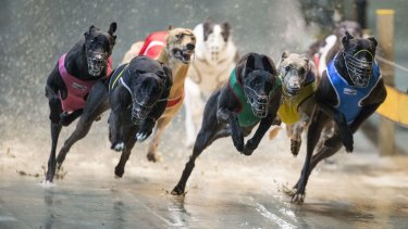 The NSW government launched a $1.6 million advertising blitz to back up its decision to ban greyhound racing.