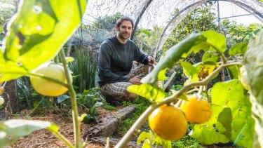 Joe Hallenstein has established a backyard urban vegie garden at his home in Highgate Hill.