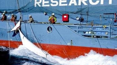 Japanese whaling harpoon ship offloads a minke whale onto the Japanese whaling factory ship the Nisshin Maru in the Southern Ocean in February 2013.