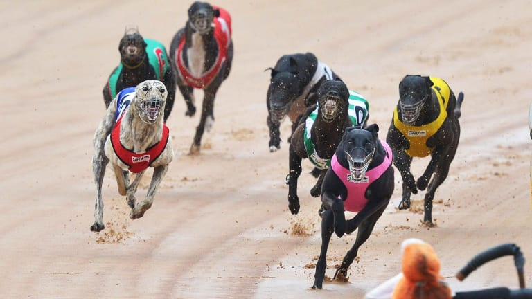 It was business as usual at the Warragul greyhound races at Logan Park on Tuesday afternoon.