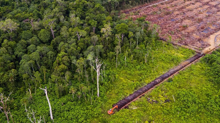 Deforestation in the Leuser Ecosystem in August.
