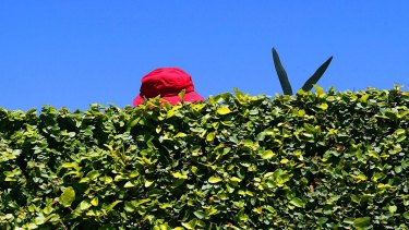 Now is the time to plan a hedge, and the options are seemingly infinite.