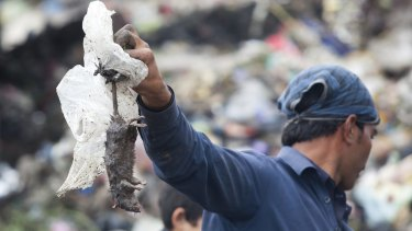 A worker holds a dead rat at the main garbage dump in the city of Peshawar. The city's new rat hunters are up against pests that can produce 20 offspring every 20 days.
