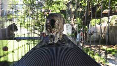 Feral Cats Could Be Declared Pests In The Act