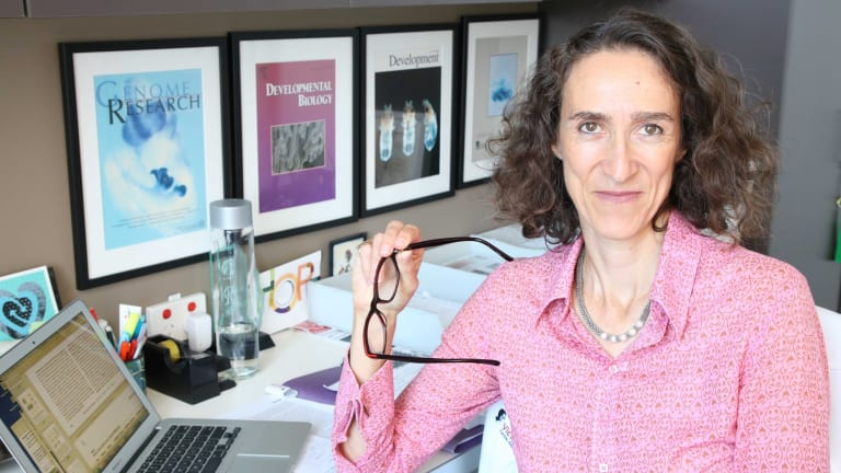 Professor Sally Dunwoodie from the Victor Chang Cardiac Research Institute who is going to announce a major breakthrough on miscarriage and birth defects on Thursday.