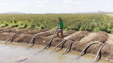 Christian Bloecker of Bothkamp Australia Farms on his Chia plantation in Kununurra, Western Australia.