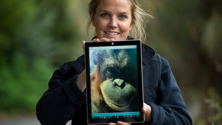 Dr Sally Sherwen and colleagues have been using interactive iPad games with Melbourne Zoo's orang-utans. She is holding a selfie that orang-utan Kiana took.