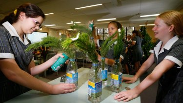 The students found hairspray, more than water and beer, kept the cut branches alive best.