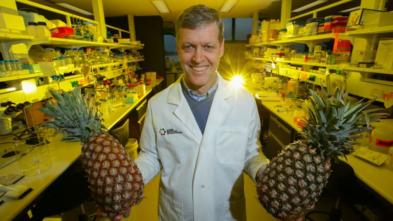 Biochemist Professor Rob Pike says enzymes found in pineapples can cure diarrhoea in piglets, reducing the reliance on antibiotics.