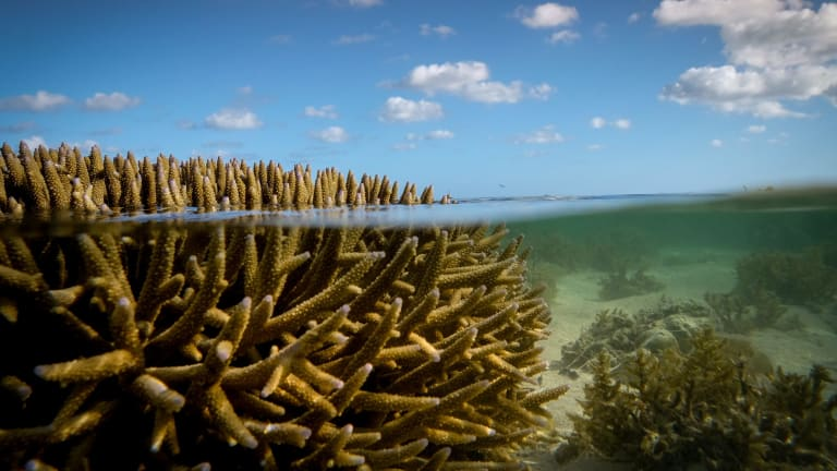 Scientists say mass coral bleaching events could be happening every two years by the mid-2030s.