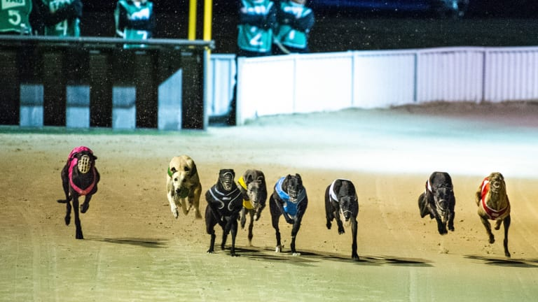 Canberra's last greyhound race meeting on Sunday night.