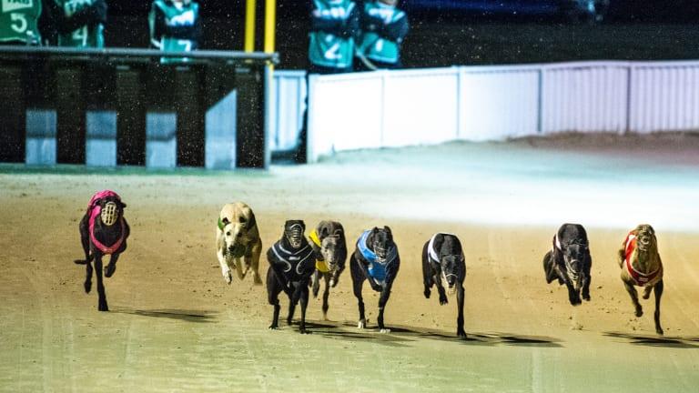 Canberra's last greyhound race meeting on Sunday night.