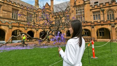 Selene Han of Rhodes secured a momento of the fallen jacaranda at the University of Sydney.