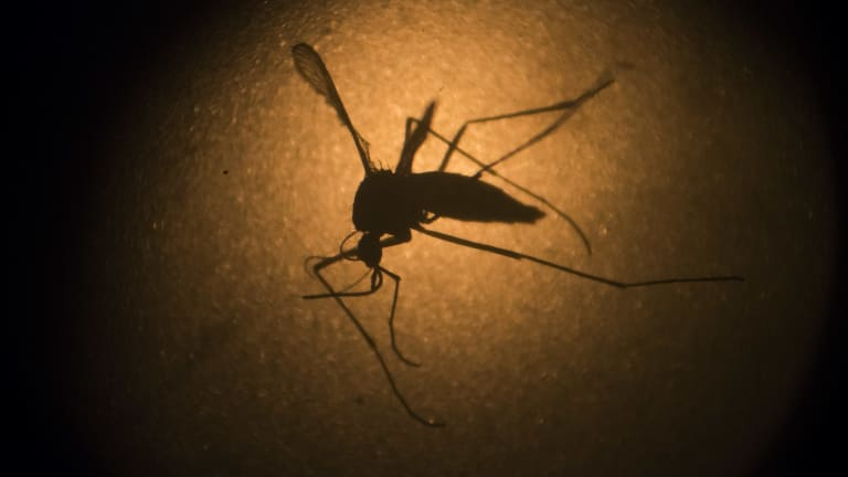 The mosquito may learn to associate your swatting vibrations with your scent and it just may remember: this is not a person who will tolerate me.
