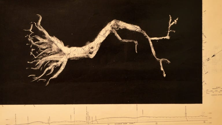 Bonsai/Print: Peter McLean's 'Eucumbene' (2016).